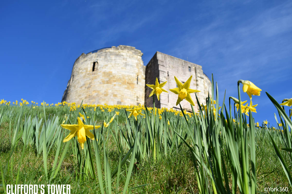Clifford's Tower in York. Daffodils